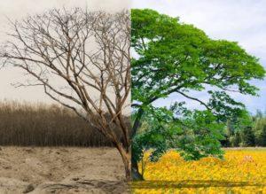 Extractive versus regenerative